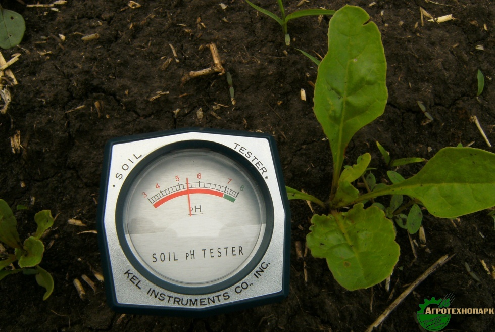 Как в домашних условиях измерить кислотность почвы